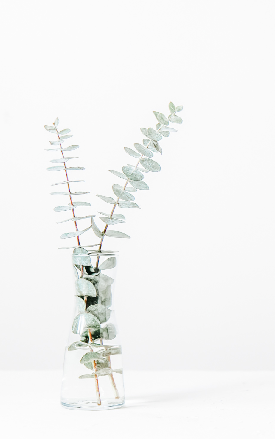 Eucalyptus branches in a glass
